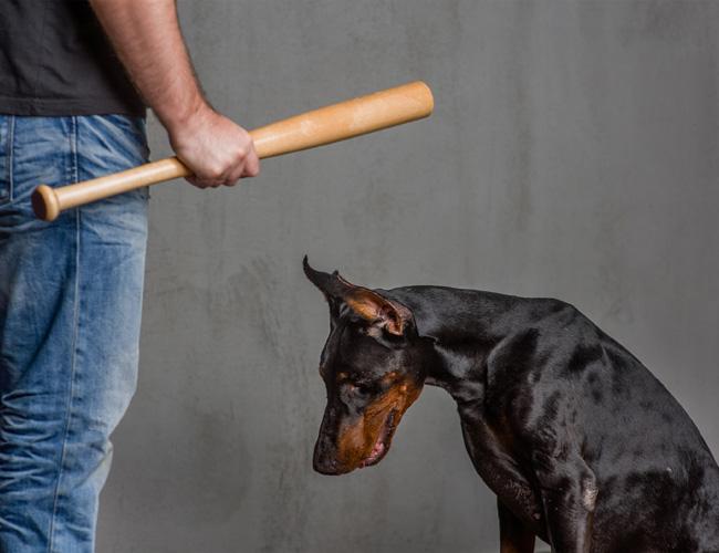 חוקקו חוקים ברורים כנגד התעללות בבעלי חיים