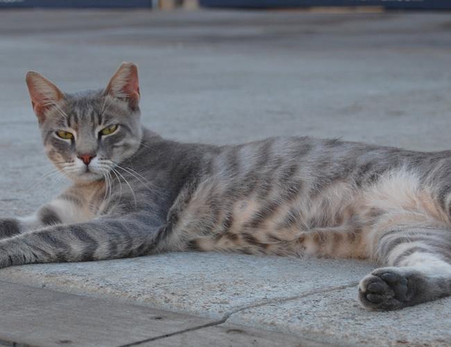 חתולי רחוב והשפעתם על האזרח